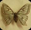 Butterflyicon