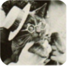 Newcaticon